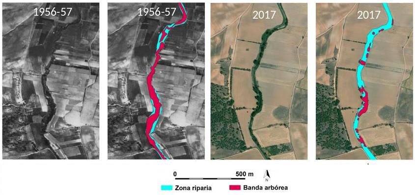 Lucille Porée, estudiante de una universidad francesa, ha defendido su TFM sobre la evolución de las zonas riparias